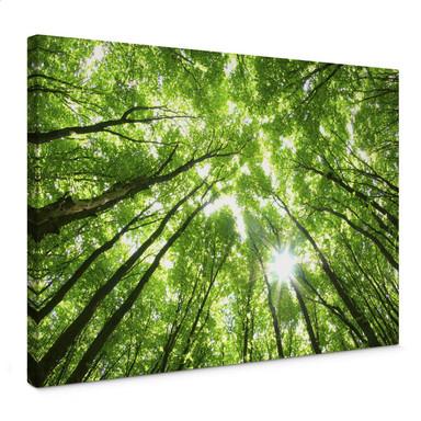 Leinwandbild Sunny Forest 2