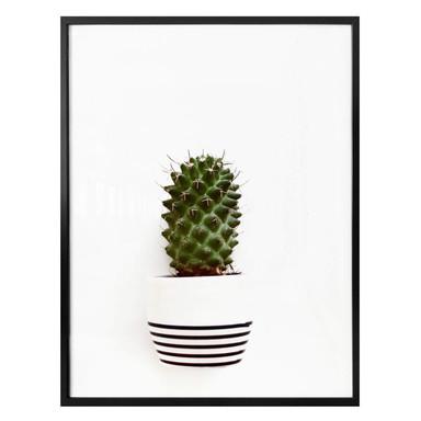 Poster Mein kleiner Kaktus - Solo