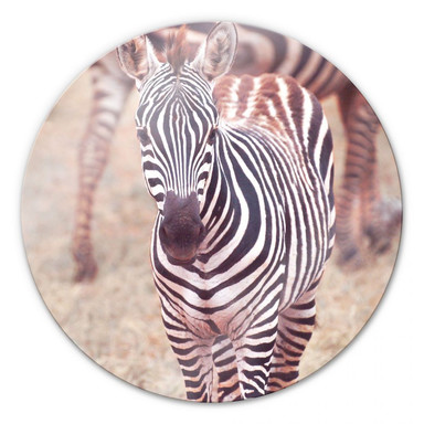 Glasbild Zebra Fohlen - rund