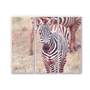 Hartschaumbild Zebra Fohlen (3-teilig)