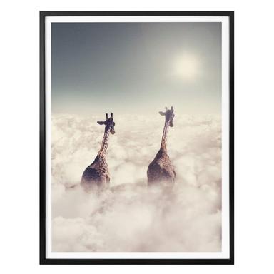 Poster Loose - Giant Giraffes