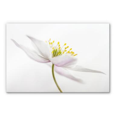 Acrylglasbild Disher - Nemorosa