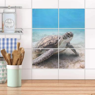 Fliesenfolie quer - Green Sea Turtle