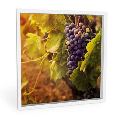 Hartschaumbild Toskanische Weinrebe
