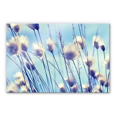 Acrylglasbild Delgado - Wind im Gras