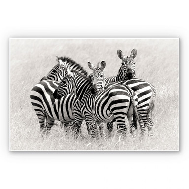Wandbild Trubitsyn - Zebras in der Savanne