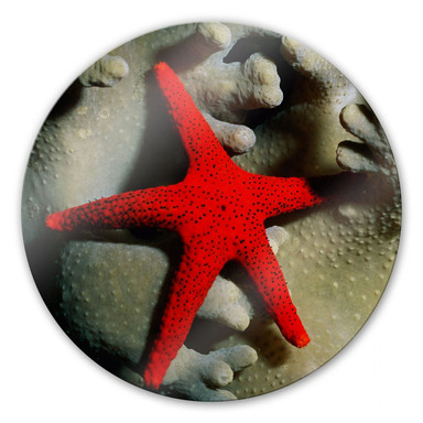 Glasbild Roter Seestern - rund