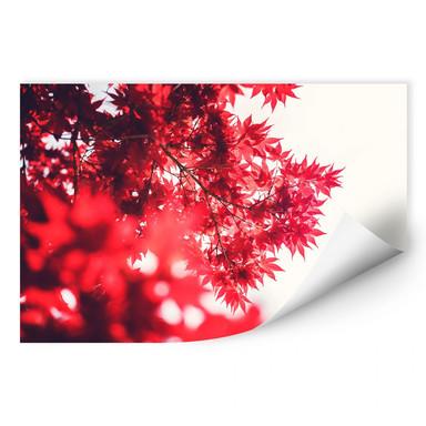 Wallprint Ahornbaum im Herbst