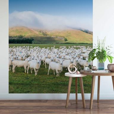 Fototapete Colombo - Schafherde in Neuseeland - 192x260cm - Bild 1