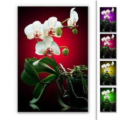 Hartschaumbild Blütenpracht einer Orchidee