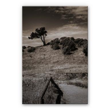 Alu Dibond Bild Landschaft auf Hiddensee