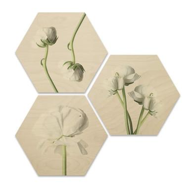 Hexagon - Holz Birke-Furnier - Ranunkeln (3 er Set)