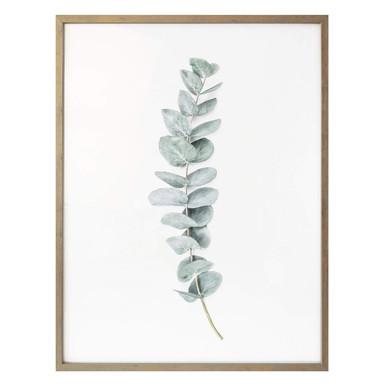 Poster Sisi & Seb - Eukalyptus: Ein Zweig