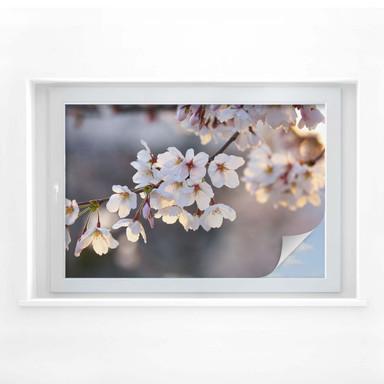 Sichtschutzfolie Kirschblütenzweig