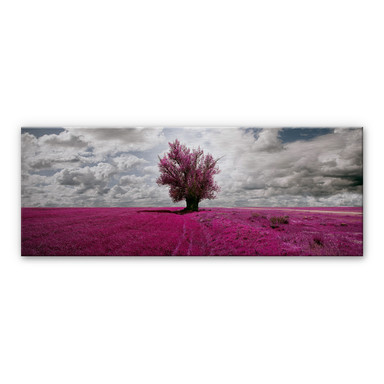 Alu Dibond Bild The Lonely Tree - Panorama