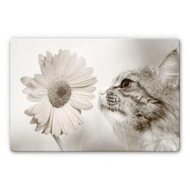 Glasbild Katzenneugier