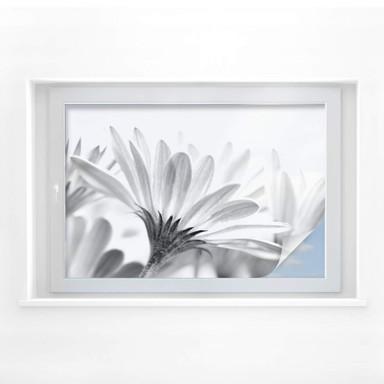Sichtschutzfolie Gänseblümchen im Detail