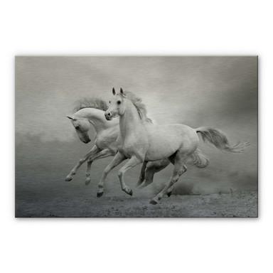 Alu Dibond Bild Pferde im Galopp