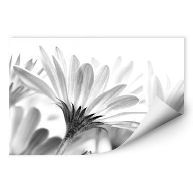 Wallprint Gänseblümchen im Detail