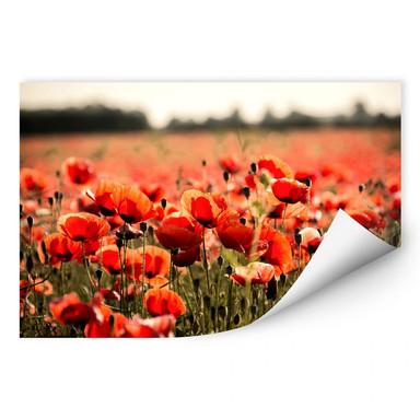 Wallprint Poppy Field