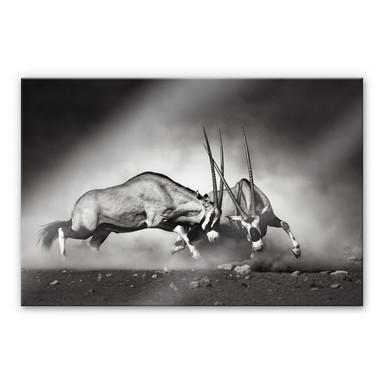 Acrylglasbild Das Duell