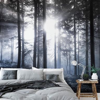 Fototapete - Sonnenstrahlen im Wald Blau