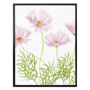 Poster Disher - Sommerblume