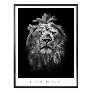 Poster Lion - King of the Jungle