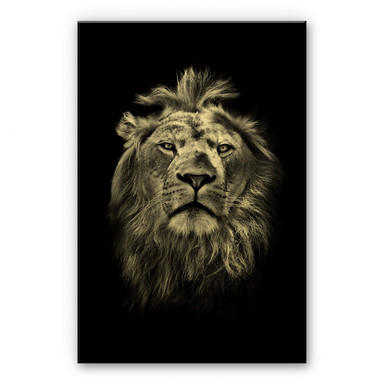 Alu-Dibond-Goldeffekt Lion