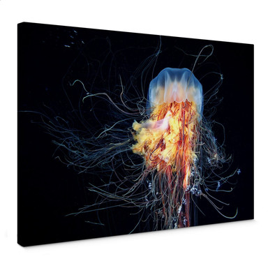 Leinwandbild Semenov - Amazing Jellyfish