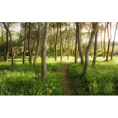 Fototapete Blütenzauberwald