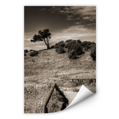 Wallprint Landschaft auf Hiddensee