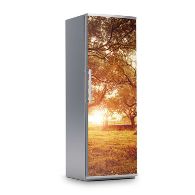 Kühlschrankfolie 60x180cm - Tree Sunlight