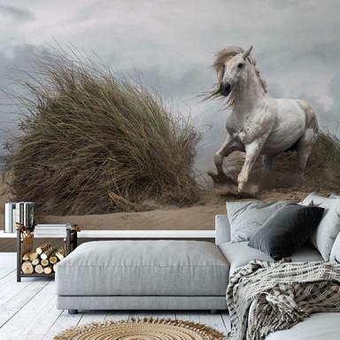 Fototapete Bressy - White Stallion