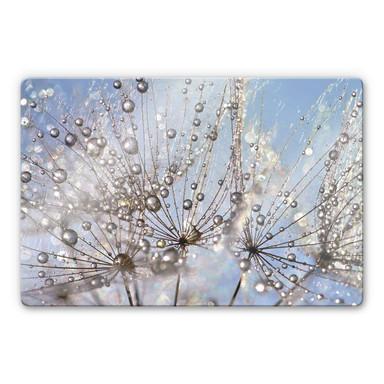 Glasbild Delgado - Wassertropfen in der Pusteblume
