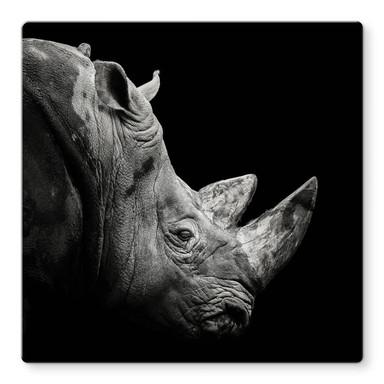 Glasbild Meermann - Das Nashorn - Quadratisch