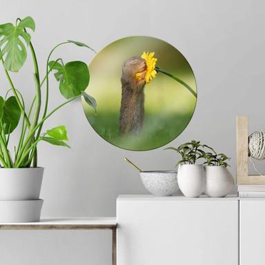 Glasbild van Duijn - Erdhörnchen riecht an Blume - Rund