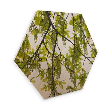 Hexagon - Holz Birke-Furnier Kadam – Eichenbaum