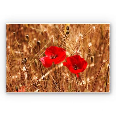 Wandbild Mohnblüten im Feld