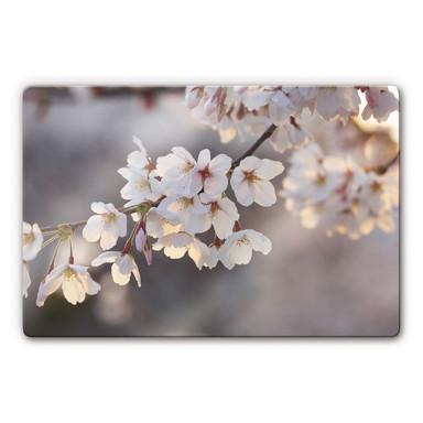 Glasbild Kirschblütenzweig