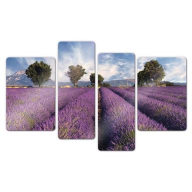 Glasbild Lavendelfeld (4-teilig)