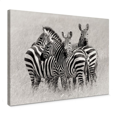 Leinwandbild Trubitsyn - Zebras in der Savanne
