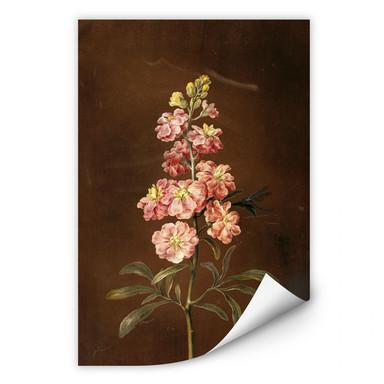 Wallprint Dietzsch - Eine rosa Garten Levkkoje