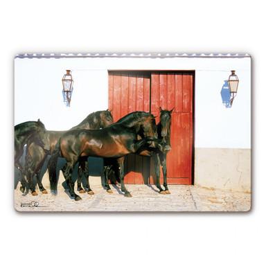 Glasbild Boiselle - Andalusierhengste in Spanien
