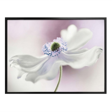 Poster Disher - Anemone Breeze
