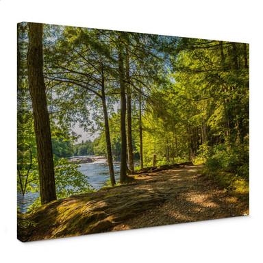 Leinwandbild Waldweg am Fluss