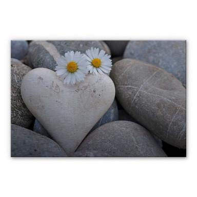 Alu Dibond Bild Liebesblumen