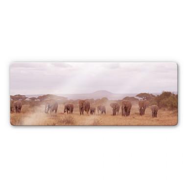 Glasbild Elefantenherde Panorama