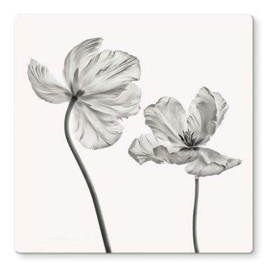 Glasbild Grønkjær - Tulpenblüte