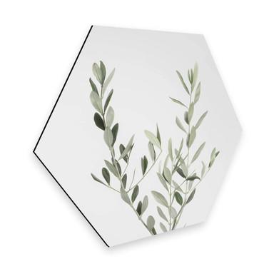 Hexagon - Alu-Dibond Sisi & Seb - Olivenzweig